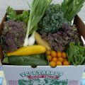 Local Harvest - pop in your zip code to find local farmer's markets, organic farms, co-ops and more.