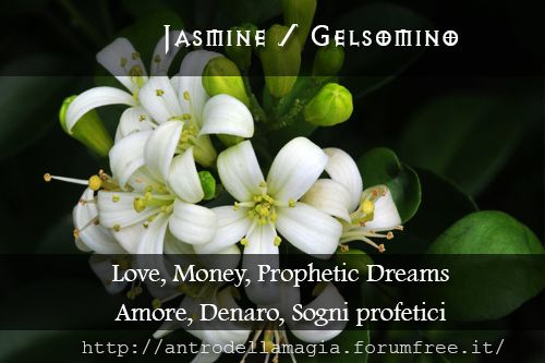 Jasmine: Love, Money, Prophetic Dreams // Gelsomino: Amore, Denaro, Sogni profetici | L'antro della magia http://antrodellamagia.forumfree.it/?t=56611630