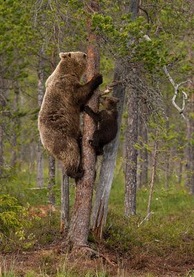 Climbing with Mom - stock photo
