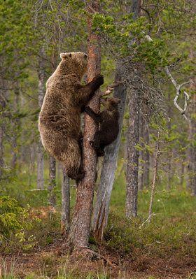 Climbing with Mom - stock photo