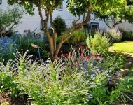 The herb garden at Grande Roche, Paarl