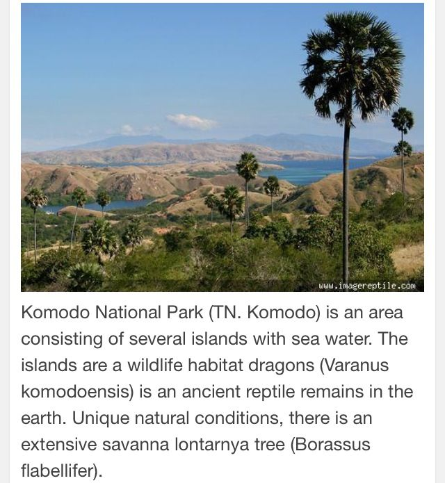 Komodo Island-East Nusa Tenggara Indonesia.
