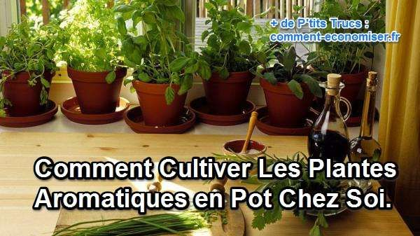 323 best plantes et jardinage images on pinterest for Plantes aromatiques