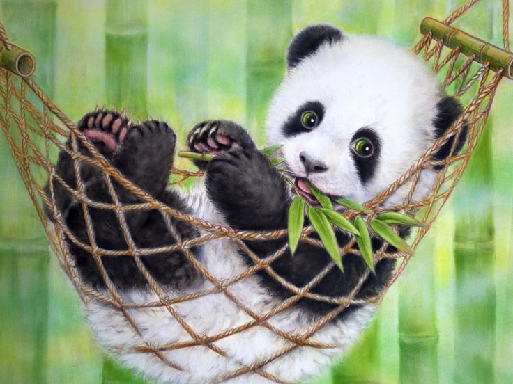 HD Cute Panda Picture Tumblr.