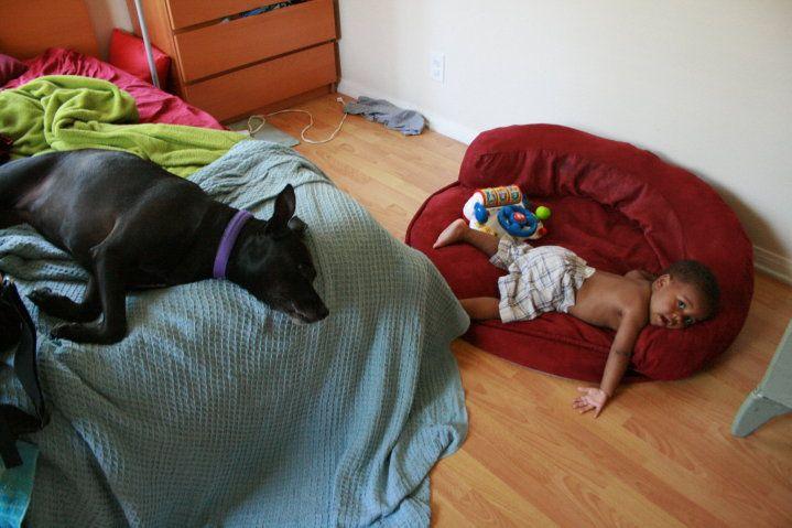 Pitbull and Labrador taken by DawnGJ