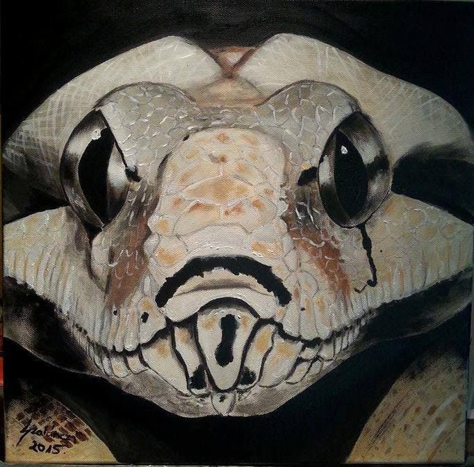 Boa Constrictor - 40*40 cm Large Acrylic Painting on Stretched Canvas - 2016