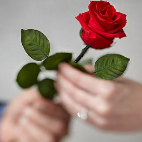 Best 25 Single Rose Ideas Only On Pinterest Most