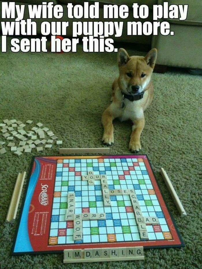 Doggo does scrabble