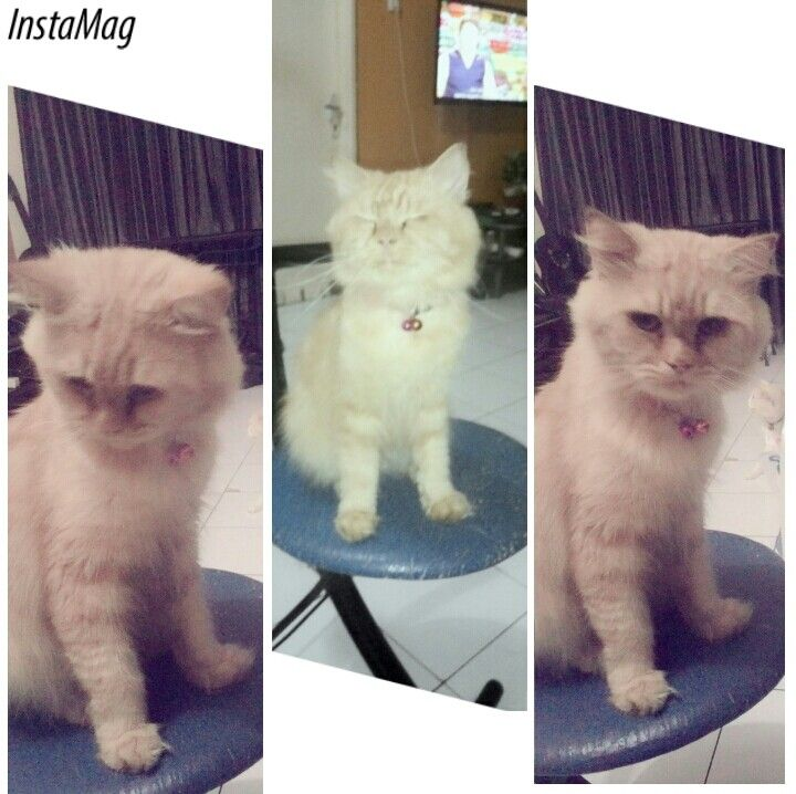 Garfield_my funny cat1