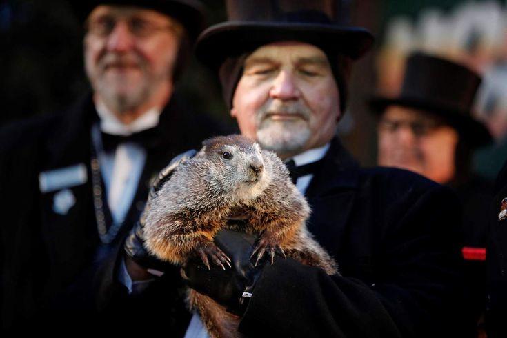 #DESTACADAS:  Predice marmota Phil, un invierno más largo en EU - El Siglo de Torreón