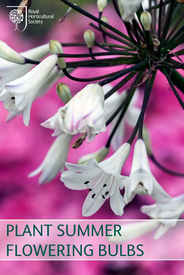 14 best garden jobs april images on pinterest gardening for Gardening jobs for april