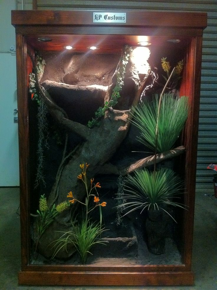 H P Reptiles 1000+ images ab...