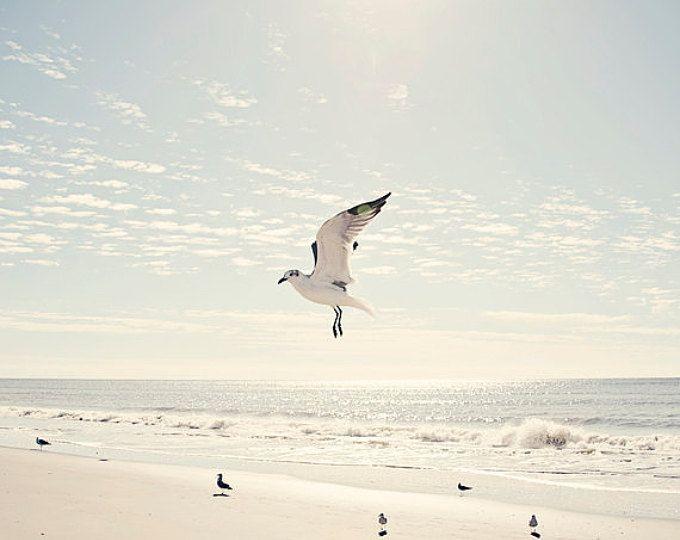 zeemeeuw kunst, kunst aan de muur van de kust, strand decor, nautische wand decor, zeemeeuw fotografie, strand kunst aan de muur, Oceaan decor, kust prenten, strand kunst
