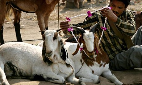Article from Global Animal about animal sacrifice in India