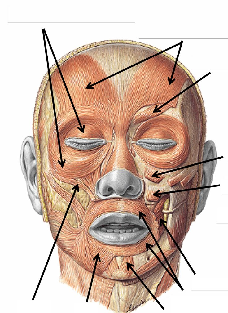 636 best forensic anatomy references-face images on pinterest, Human Body