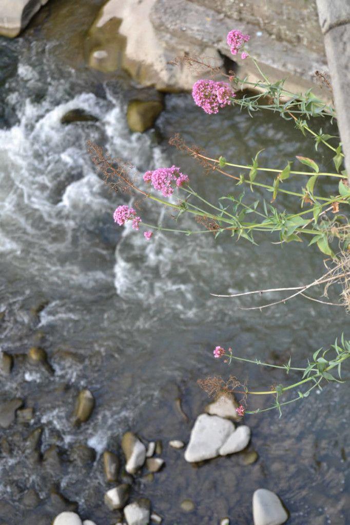 fiori sospesi su torrente di sfondo effetto bokeh