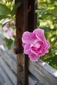 Fotogalleri från Wij Trädgårdar av fotograf Pernilla Hed