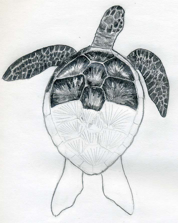 45 best Sea Turtles tattoo drawings and designs images on