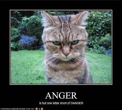 ANGER is but one letter short of DANGER...Lol Animal Humor | Cats