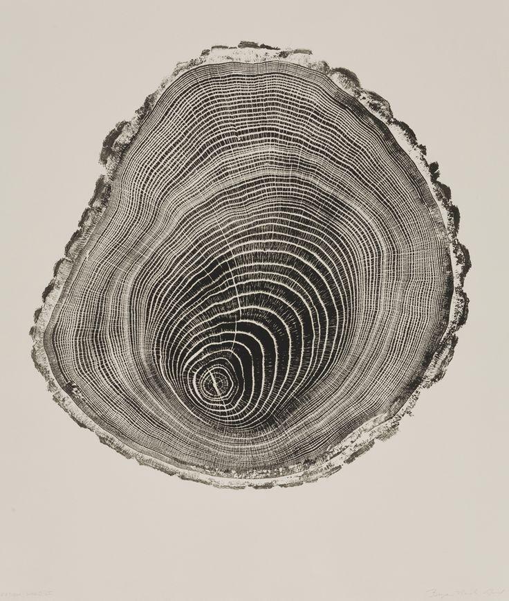 Des tranches darbres tranche strie arbre 05