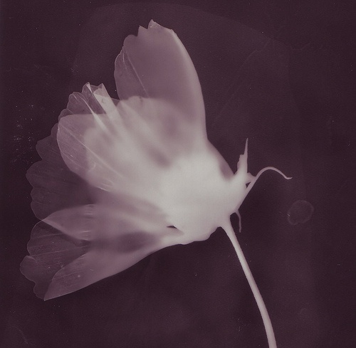 Antonia Flowerville | Photogram 2