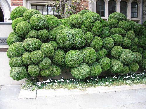 Fantastical shrubbery!