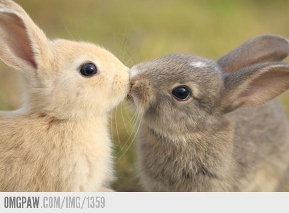 OMGPaw - twee konijnen