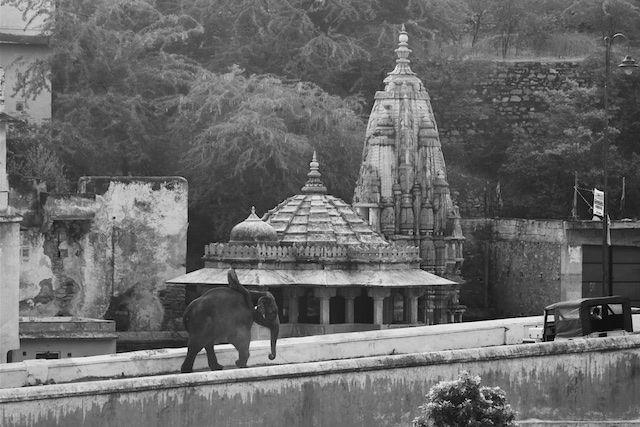 A man riding an elephant along ancient palace walls, Jaipur, India