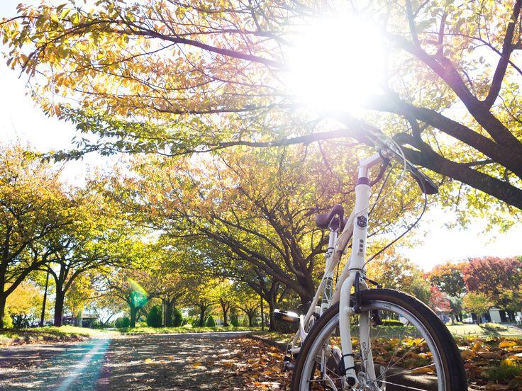 Copyright © 松永リョウタ 様 / dDAHON Dash P8(2013) / 初めてのミニベロ。小さなタイヤでコロコロ走っていると、子供のときの自転車を思い出しました。幼心に、どこにでも行ける、と感動した気持ちがよみがえったようで、乗っていて楽しいです。ロードやクロスバイクももちろんよいですが、小さいのに、漕ぎの軽さもバランスもしっかりスポーツバイクのDashには、なんだか心の違うところをくすぐられるというか。素敵な自転車を、ありがとうございました。