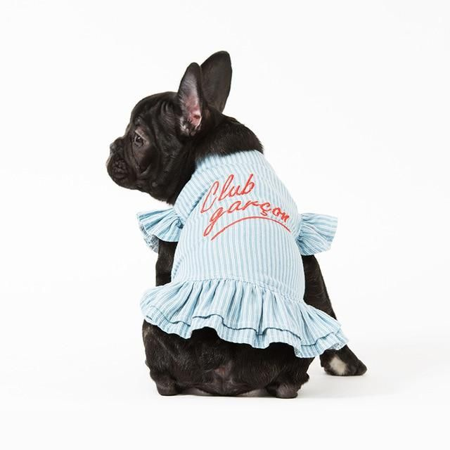 Jumpsuit Club Garcon – Chihuahua Kleding #frenchie