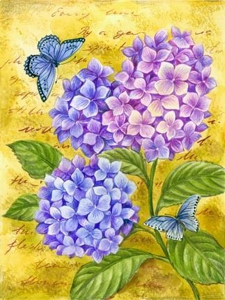 HYDRANGEA AND BUTTERFLY *