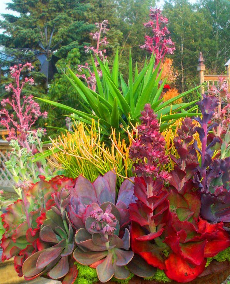 Succulent Garden Arrangement