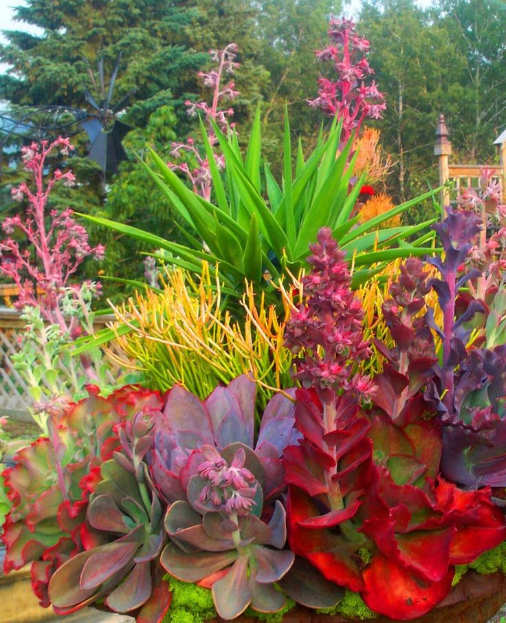 111 best images about garden sedum succulants on for Colorful plants for landscaping