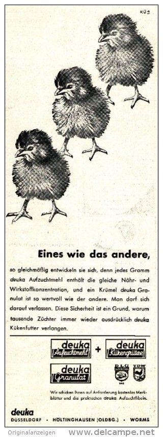 Original-Werbung/ Anzeige 1958 - DEUKA KÜKENFUTTER  - ca. 90 x 240 mm