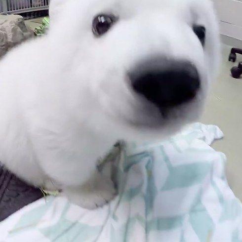 A Zoo Filmed A Polar Bear Cub As She Grew Up And It Is The Cutest