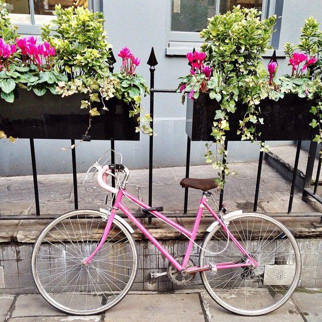 I heart pink #pink #pinkcolour #bike #cycling #flowers #islington #camdenpassage by theonlyhellebelle http://ift.tt/1EEmOLQ