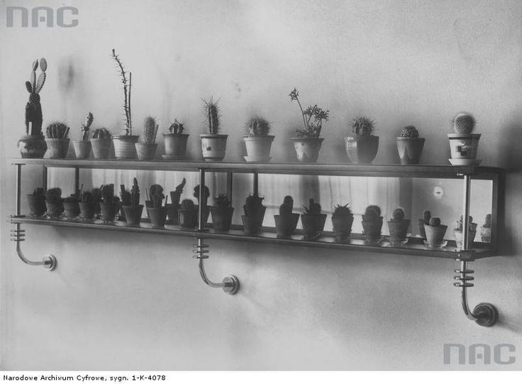 Półka z kaktusami według projektu architekta, projektanta wnętrz i mebli Józefa Odo Litawskiego.