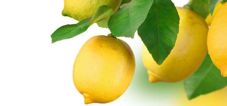 ¿Cómo atraer dinero con limón? Compra el mejor limón