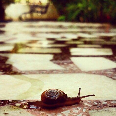Snail !