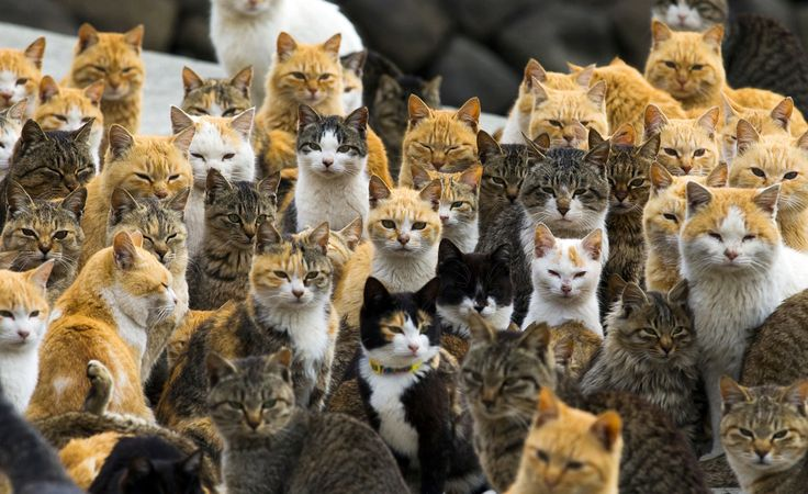 Cats crowd the harbor on Aoshima Island in the Ehime prefecture of southern Japan on February 25, 2015.