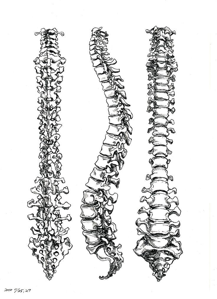 spinal cord | Tumblr