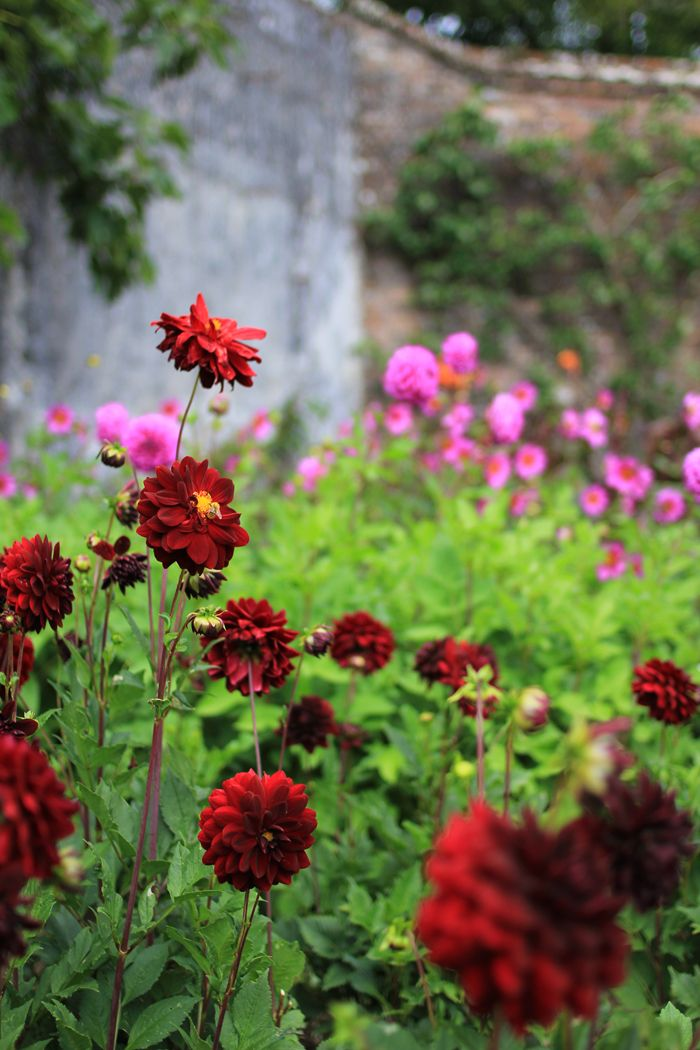 The Lost Gardens of Heligan | A Cornish Road Trip - The Peppermint Pencil