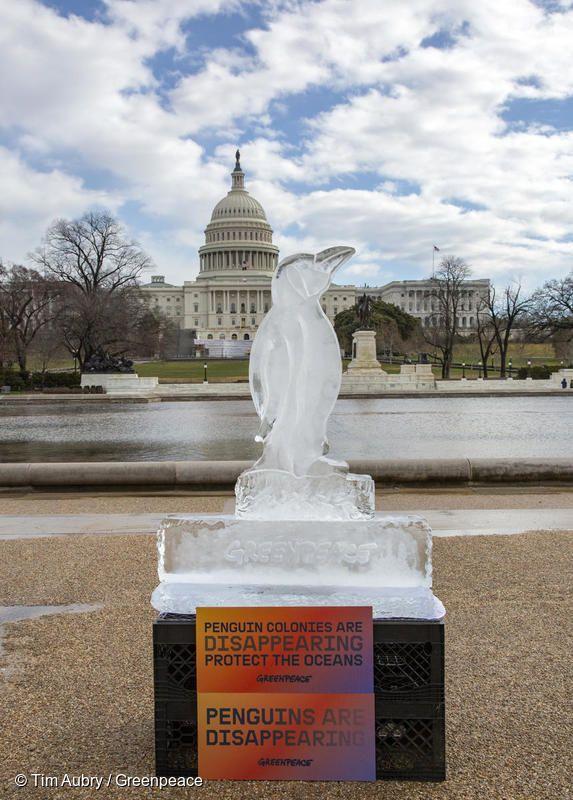 Washington Penguin Ice Sculpture