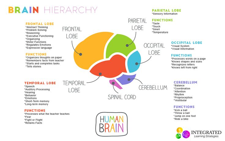 Brain Hierarchy: When Your Child's Lower Brain Levels Are Weak, theyCan't Learn This article contains information regarding the brain hierarchy and how each part affects learning in the classroom. Affiliate links are included for your convenience. Did you know that the brain of an infant contains essentially all the brain cells that they will ever need for learning throughout their lifespan? Add this to the... Read More
