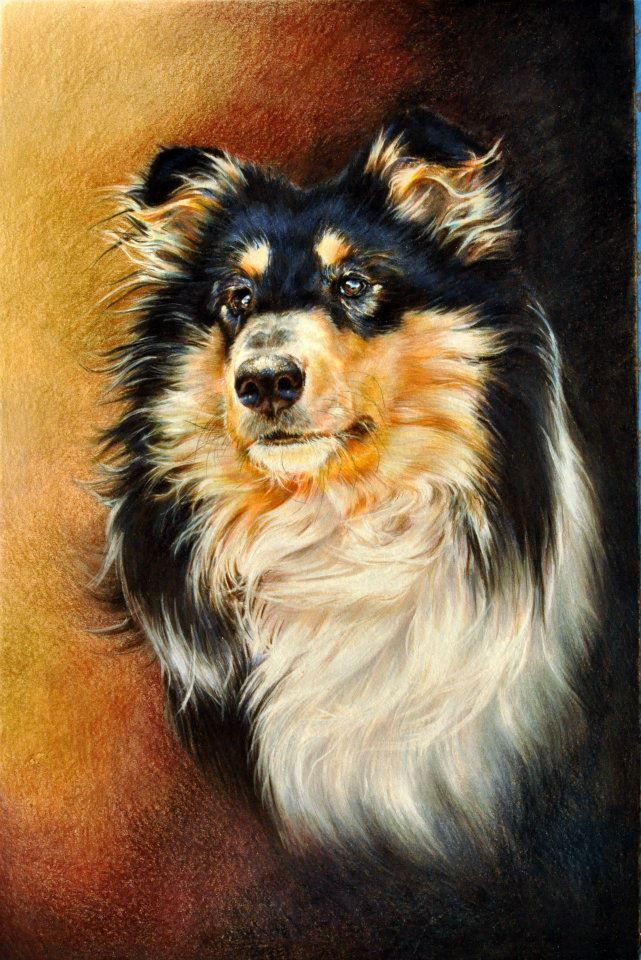 Dog done in colored pencil - https://www.facebook.com/home.php#!/pages/tybi-studio/105503256157763?sk=info and http://www.tybistudio.com