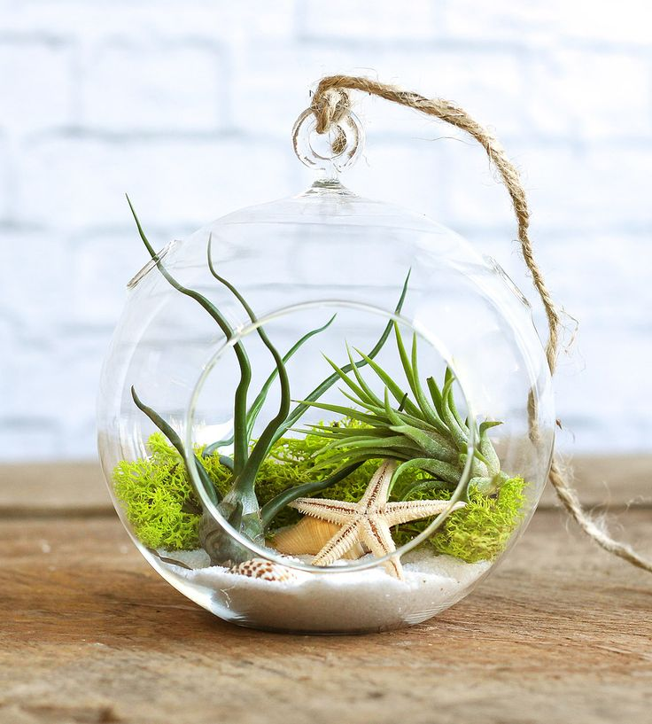 DIY Seascape Air Plant Terrarium Kit   Create a tiny beachy environment to show off your new favorite...   Indoor Plants