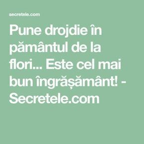 Pune drojdie în pământul de la flori... Este cel mai bun îngrășământ! - Secretele.com