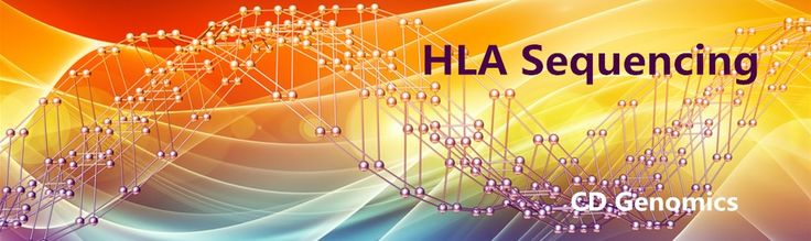 CD Genomics provides accurate HLA Sequencing service using next-generation sequencing (NGS) or Sanger sequencing technology.  #HLASequencing  #HLA #Sequencing