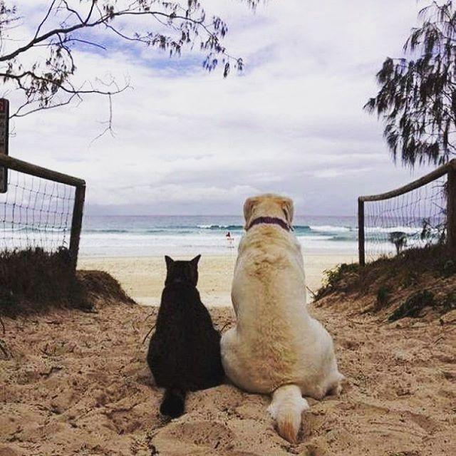 🐱🐶 #journey #voyage #holiday #travel #vacation #Sea #beach #sunshine #backpackers #instatravel #instago #travelgram #centralthailand #HuaHin #PrachuapKhiriKhan #siam #Thailand #旅行 #冒険 #バックパッカー  #海 #ビーチ #太陽の光 #休日 #タイ中部 #フワヒン #プラチュワップキーリーカン #タイ by (bunny.boat) instatravel #instago #バックパッカー #prachuapkhirikhan #タイ中部 #休日 #ビーチ #holiday #journey #冒険 #voyage #travel #フワヒン #huahin #タイ #プラチュワップキーリーカン #旅行 #beach #海 #centralthailand #thailand #sea #太陽の光 #siam #backpackers #sunshine #travelgram…