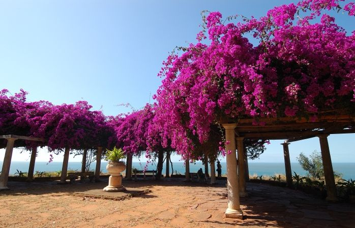 Un jardin de fleurs roses surplombant la côte à Maputo, Mozambique © Rosino #momondo